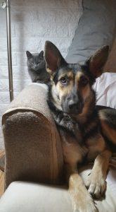 Sadie & her new sidekick, the cat!