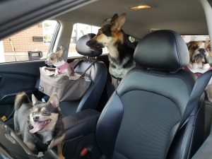Sadie & New Family